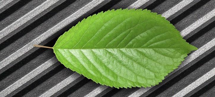 green leaf on metallic background